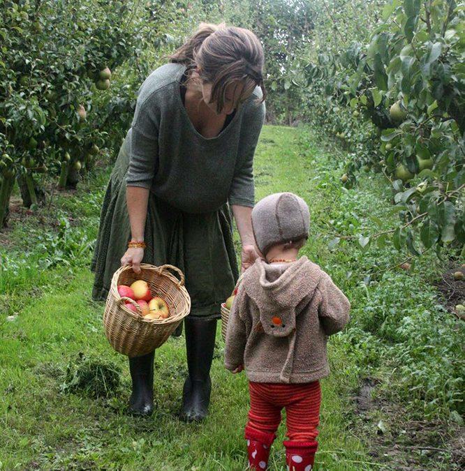 Waarom appels plukken als je ze ook kunt kopen?
