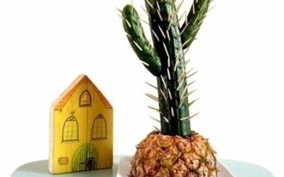 Lekkere snack: Van komkommer tot cactus!