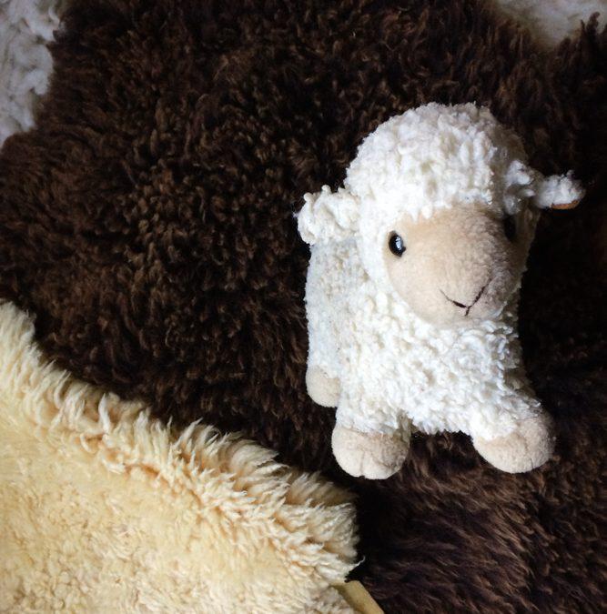 Hoe diervriendelijk is wol?