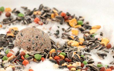 Vetbollen en pindaslingers voor wintervogels